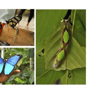Готовый бизнес с рентабелностью 500% Ферма Живых Тропических Бабочек