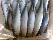 Свежемороженая рыба с Дальнего Востока!