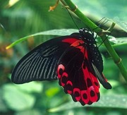Восхитительные Живые Бабочки из  Южной Америки