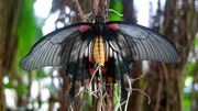 Экзотические Живые Бабочки из  Тайланда